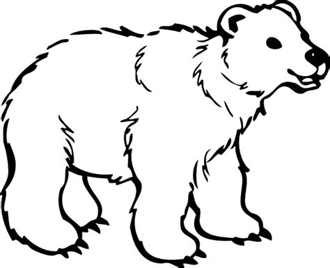 polar bear coloring pages coloring pages  print