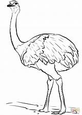 Emu Kleurplaten Coloring Vogel Kleurplaat Gratis sketch template