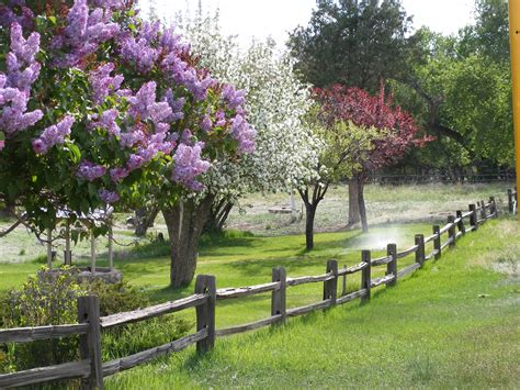 images flowering trees top 28 blossoming trees visit my garden spring flowering trees flowering trees small