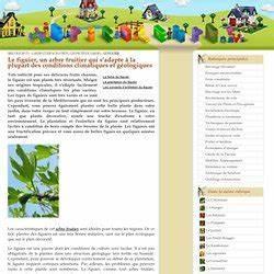 Planter Un Figuier : jardin pearltrees ~ Melissatoandfro.com Idées de Décoration