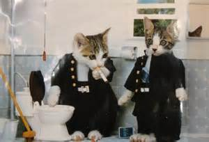 Cats Wearing People Clothes