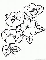 Cherry Blossom Coloring Pages Colouring Branch Popular sketch template