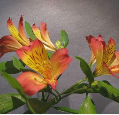 fiori nome il dizionario dei fiori il giardino incantato