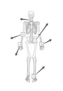 Types Joints Human Body Worksheet