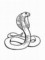 Snake Coloring Reptiles Cobra Printable Snakes Python Zoo Via sketch template