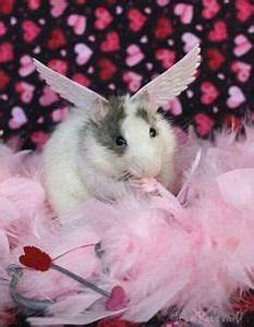 1000+ images about Rats Love Hearts on Pinterest | Rats ...