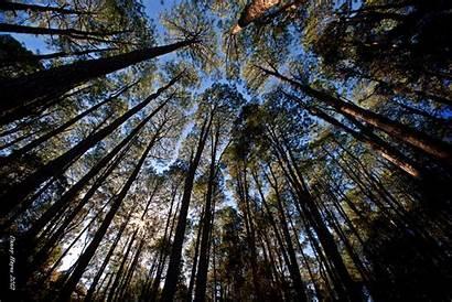 Forest Desktop Bush Australian Australia Screensaver Woodland