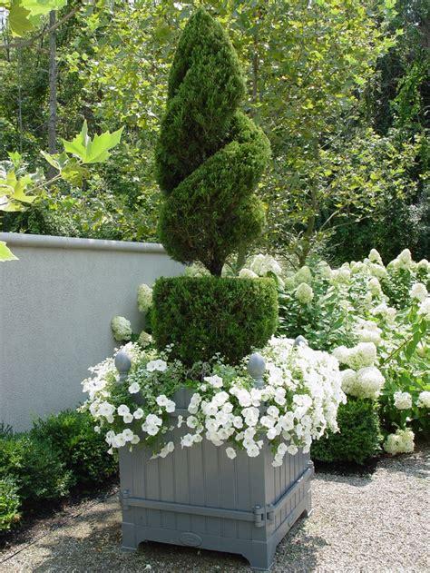 topiary juniper in orangerie box container gardens
