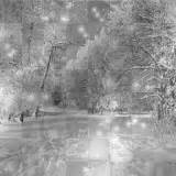 soave background animated winter forest black white ...