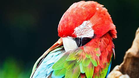 where do birds sleep how much do birds sleep pet bird youtube