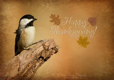 happy thanksgiving day pictures wallpapers hd images