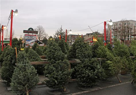christmas tree lot near me buy a tree help ballard boy scouts my ballard