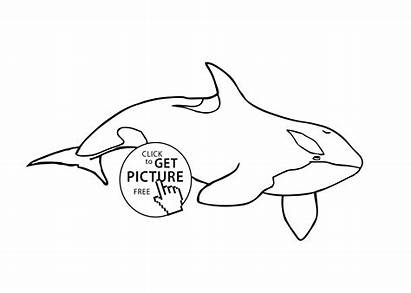 Coloring Pages Orca Whale Killer Sea Animals