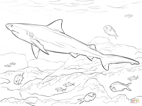realistic bull shark coloring page  printable