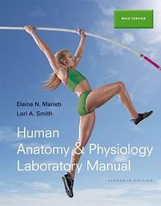 Marieb  U0026 Smith  Human Anatomy  U0026 Physiology Laboratory