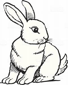 Rabbit Stock Vector Art & More Images of Animal 165669786 ...