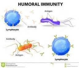 What are the differences between antigens and antibodies ...