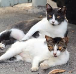 cats file feral cats jpg wikimedia commons