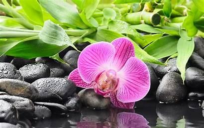 Orchid Orchids Wallpapers Zen Spa Desktop Flower