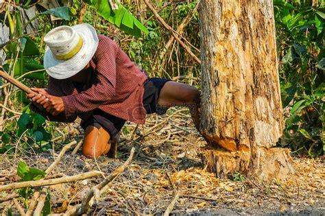 伐木工人砍树图片素材_免费下载_jpg图片格式_高清图片100257776_摄图网