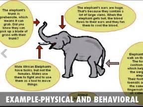 Physical Animal Adaptations Examples