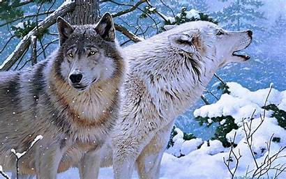 Wolf 1080p Wallpapers Wolves Desktop Widescreen Chainimage