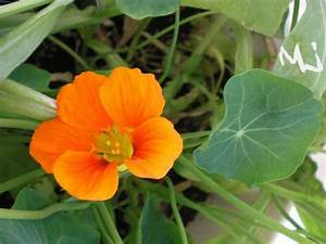 Welche Blumen Kann Man Essen : my little japanese world mein kleiner garten daheim ~ Watch28wear.com Haus und Dekorationen