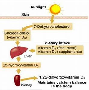 Vitamin D status in medical students and risk factor ...