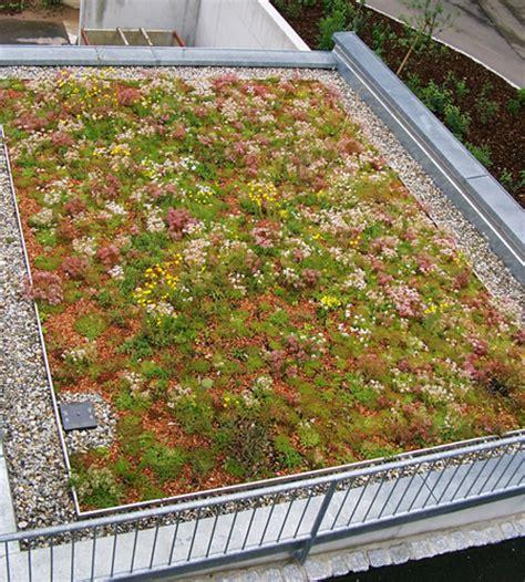 Dachbegruenung Natuerliche Klimaanlage by Marc Peschel Dachdeckermeister Industriekletterer In