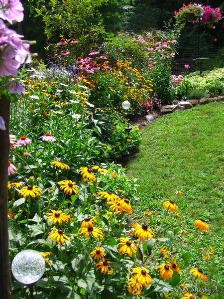 perennial border plants for sun flower bed borders sherry s place