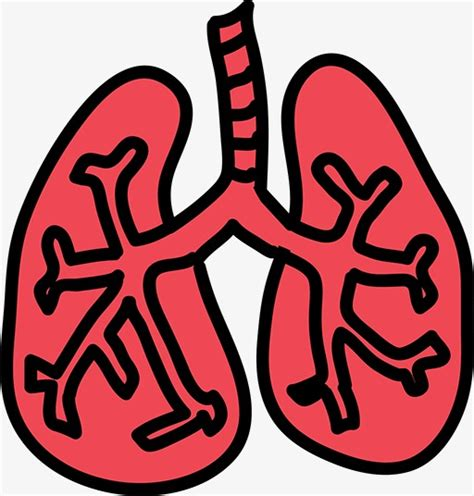 Lungs Clipart Stick Figure Lungs Lungs Clipart Lung Stick