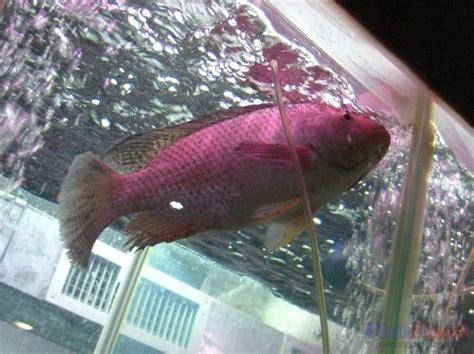 philippine fish species list  common fish