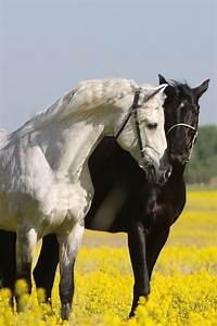 Black & White horse love | Horses | Pinterest