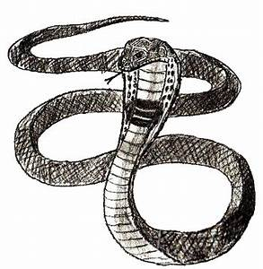 How to Draw A Snake : Step By Step Guide | How to Draw