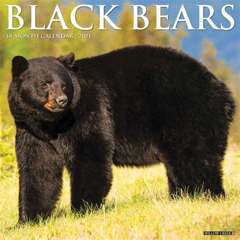 black bears calendar   calendar club