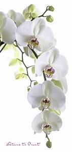 Orchidee Blüht Nicht Mehr : stoffbanner wei e orchidee im sonderformat leben mit blumen ~ Lizthompson.info Haus und Dekorationen