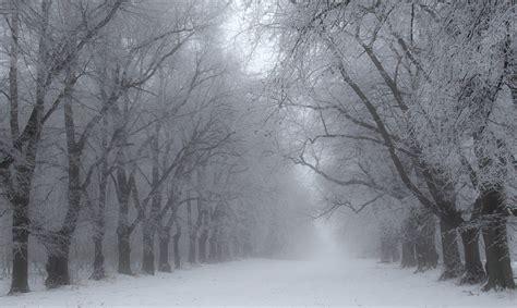 winterallee forum fuer naturfotografen