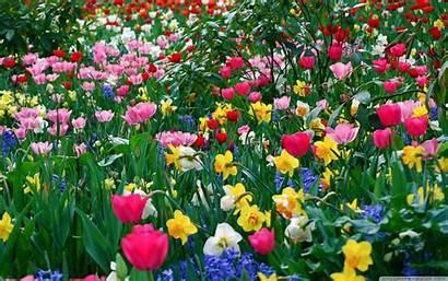 Spring Screensavers Wallpapers Desktop Springtime Screen Background