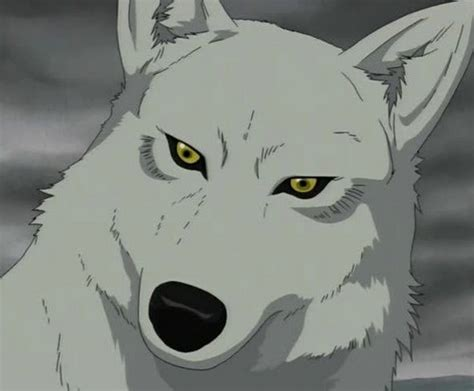 Wolfs Kiba Wallpaper by Wolf S Images Wolf S Kiba Wallpaper And