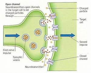 Brain Chemistry | Tamara Owen-Mental Health Nurse ...