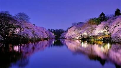 Osaka Park Wallpapers Japan Cherry Blossom Lake
