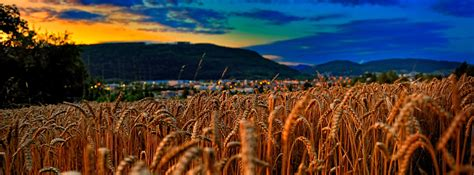 switzerland wheat field facebook cover