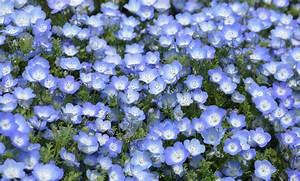 Schattenpflanzen Garten Winterhart : garten mit schatten pflanzen welche ~ Lizthompson.info Haus und Dekorationen