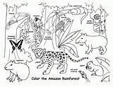 Habitat Forest Drawing Coloring Animal Animals Pages Getdrawings sketch template