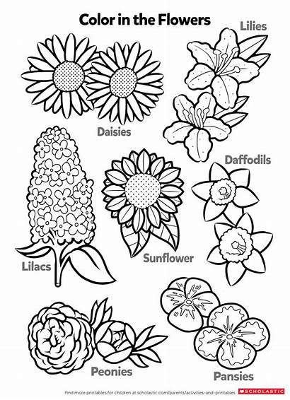 Flowers Coloring Pages Learn Worksheets Printable Activity