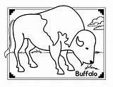 Buffalo Coloring Pages African Animals Safari Bison Printable Jungle Animal Water Template American Indian Getcoloringpages Sheet Templates Popular Adults sketch template