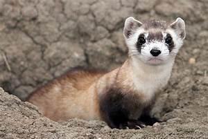 est100 一些攝影(some photos): Endangered Species. 瀕危物種
