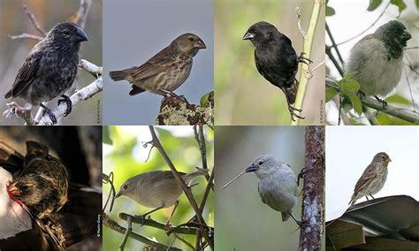 finches galapagos darwin wildlife finch tree darwins trust conservation barn galapagosconservation