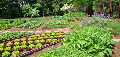 Kitchen In Your Garden by Kitchen Garden Ideas In India To Make Your Kitchen Garden