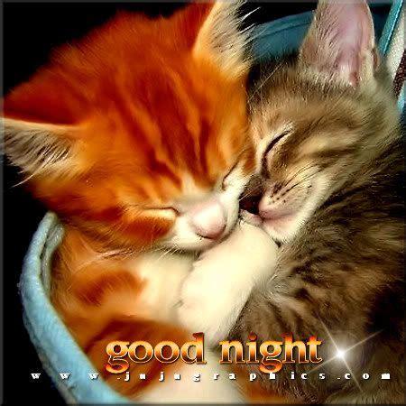Good Night Sweet Dreams Cat